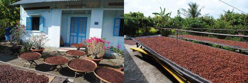 Séchage des fèves de cacao au soleil, au Vietnam